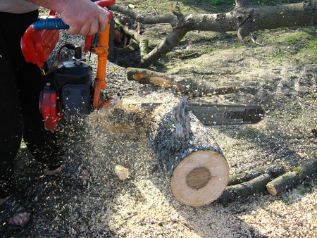 The man sawing the firewoods by petrol saw Stock Photo - 13567819