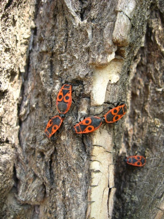 The motley bugs on the bark photo
