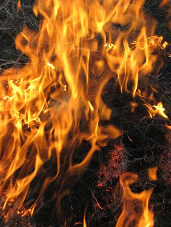 body of flame inflaming in a forest Stock Photo - 13593816
