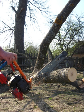 The man sawing the firewoods by petrol saw Stock Photo - 13593868