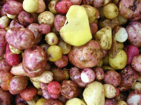 the image of harvest of pile of potatoes Stock Photo - 14006393