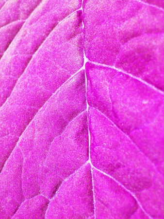 Very unusual background of unusual colored leaf photo