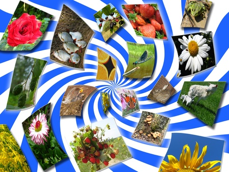 strawberry frog: collage with set of a photo