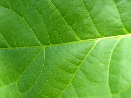 image of green background of unusual colored leaf photo