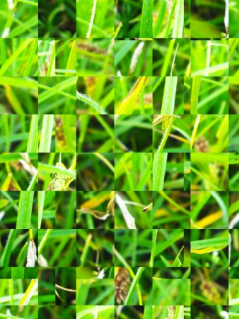 The image of green transparent background and texture photo