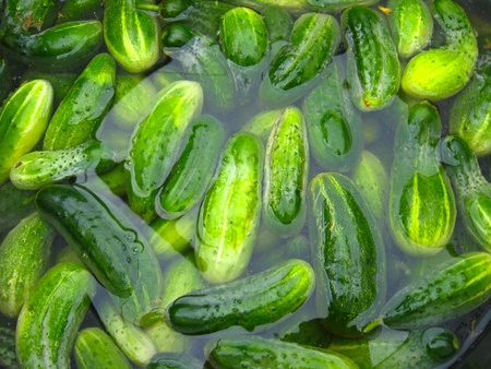 harvests: The imaga of cucumbers which prepare for preservation Stock Photo