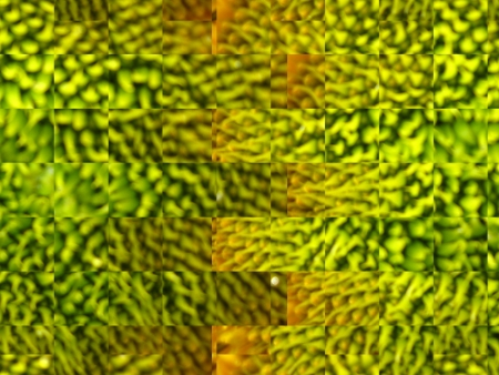 moss: The image of green abstract background and texture