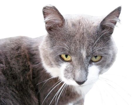 Beautiful grey cat on a white background Stock Photo