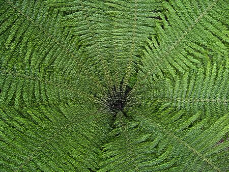 The image of nice pattern from leaves of fern photo