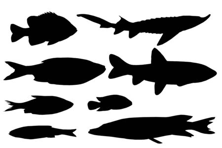 the image of silhouettes of various types of fishes photo