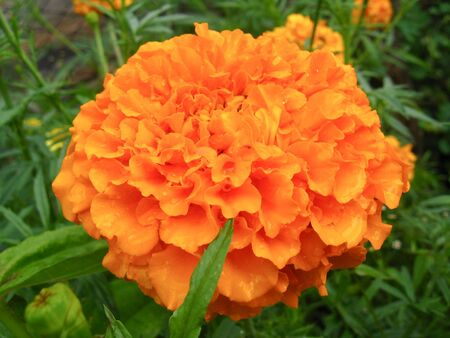 taget: A beautiful flower of motley and velvet taget