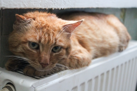 The image of red cat laying on battery Stock Photo - 17212153
