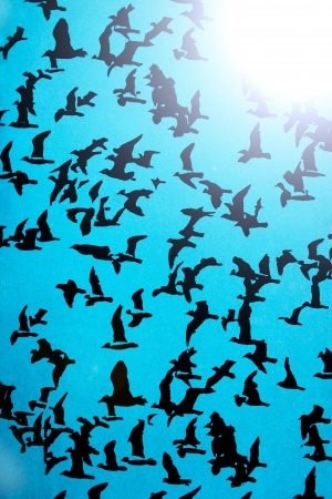 Set of black silhouettes of birds on a blue background Imagens