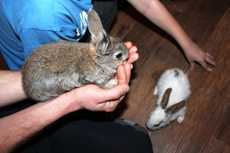 inoffensive: small nice rabbit in the hand and another one Stock Photo
