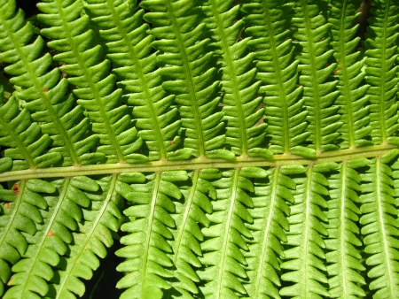 image of nice pattern from leaves of fern photo