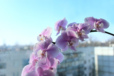 image of beautiful branch of a blossoming orchid photo