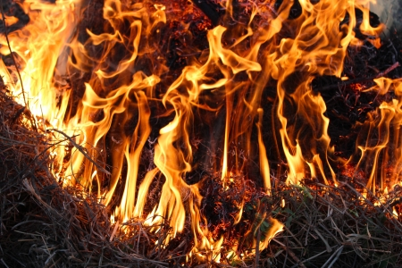 body of flame inflaming in a forest Stock Photo - 19698889