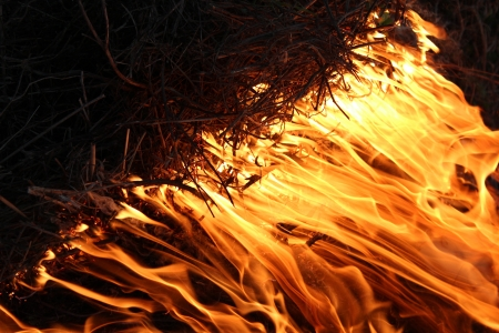 body of flame inflaming in a forest Stock Photo - 19751263