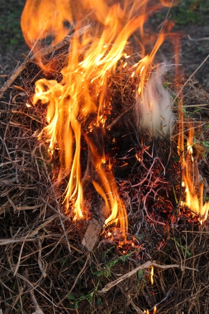 body of flame inflaming in a forest Stock Photo - 19751397