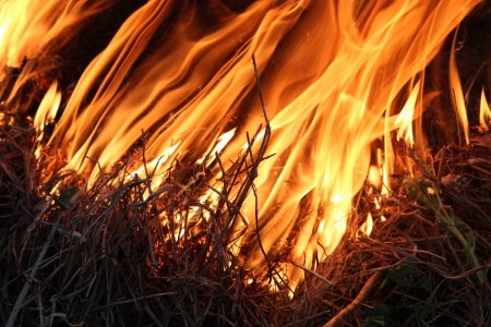 body of flame inflaming in a forest Stock Photo - 19752694