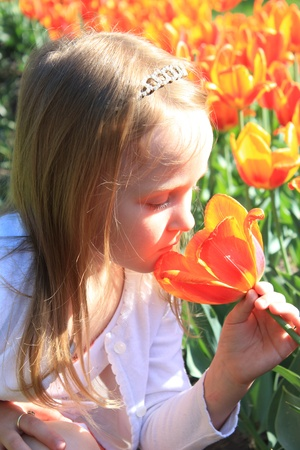 little girl smells orange tulips on the flower-bed photo