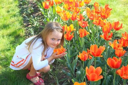 little girl smells orange tulips on the flower-bed