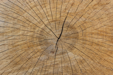 Pattern of dark wooden on a cut of the tree photo