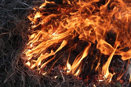 body of flame inflaming in the grass Stock Photo - 19869359