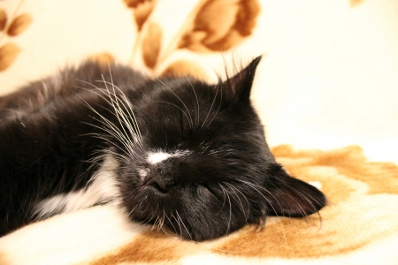 The black and nice cat sleeps on a sofa photo