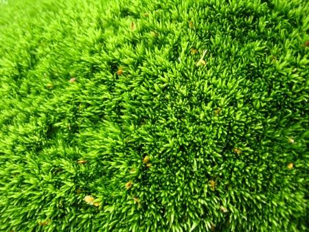 achtergrond van groene natte mos in het bos