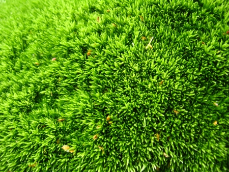 grass close up: background of green wet moss in the forest Stock Photo