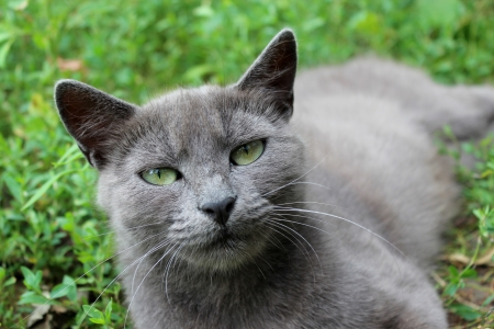 image of Siamese cat in the green grass Stock Photo - 20950922