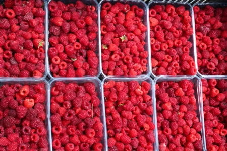 bunch of red ripe and tasty raspberry photo