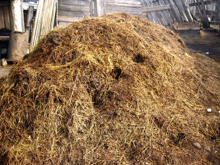 image of heap of the dung besides the shed