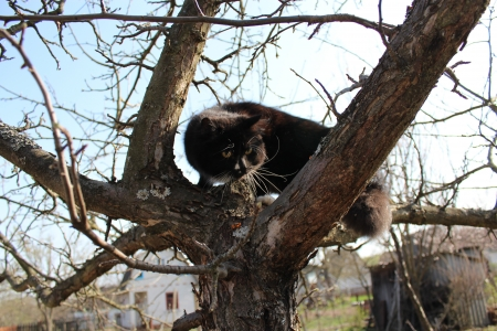 unruffled: black cat climbing up the tree in the garden