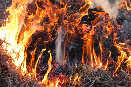 body of flame inflaming in the field Stock Photo - 22160976