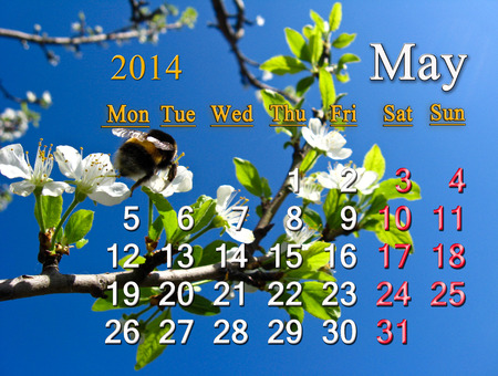 calendar for the May of 2014 year on the background of flying bumblebee photo