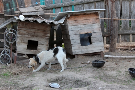 image of dog on a chain eating near the kennel Stock Photo - 24099311