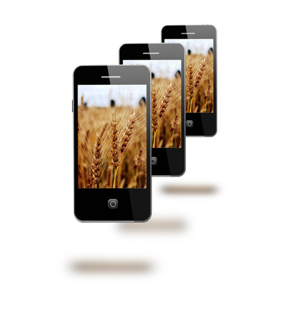 gramineous: modern mobile phones with images os fields of wheat
