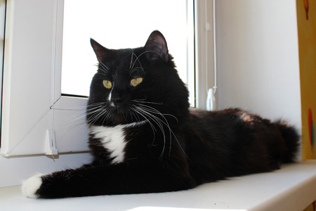 moustached: black cat laying on the white window-sill
