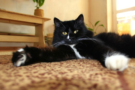 moustached: nice black cat lolling about on the carpet