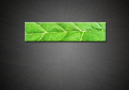 strip from green leaf on the abstract gradient dark background for the advertising text photo