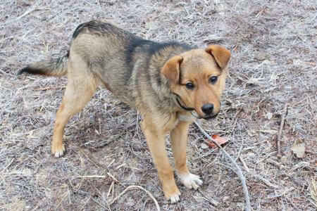 collar: small grey rural dog in collar eating