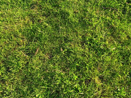 thicket: thicket of first spring green grass in the field Stock Photo