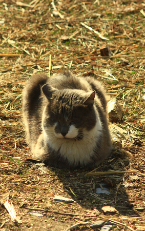 unruffled: rural cat having a rest on the ground