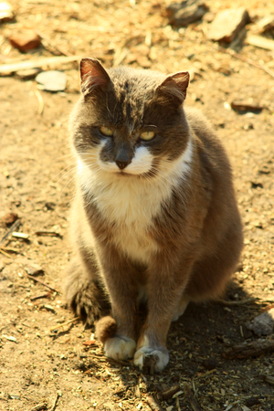 unruffled: nice rural cat sitting on the ground Stock Photo