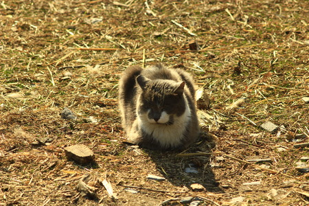 unruffled: rural cat sitting on the ground in the village Stock Photo