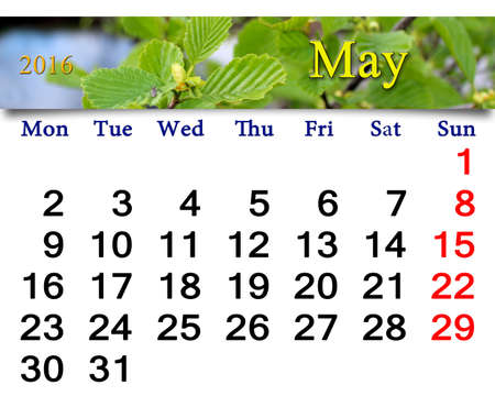 calendario: calendar for May 2016 with branch alder leaves ready for office life