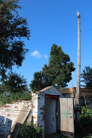 posterity: stork standing high on the rural telegraph-pole above the cellar