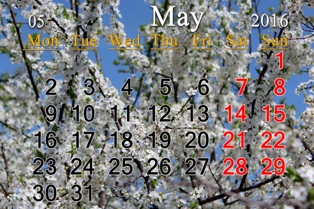 cherrytree: calendar for May 2016 with white blooming cherry-tree Stock Photo